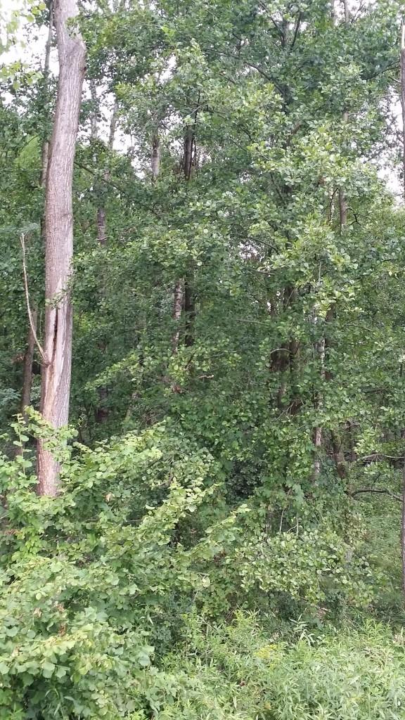 bogogno - bosco umido - ontani