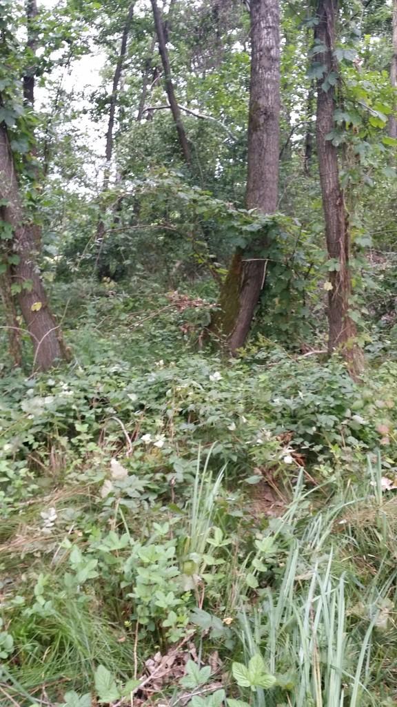 bogogno - bosco umido