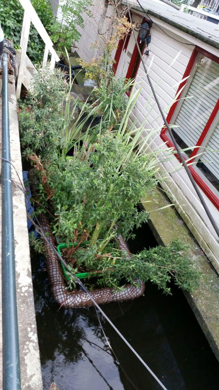 amsterdam piante acquatiche 2