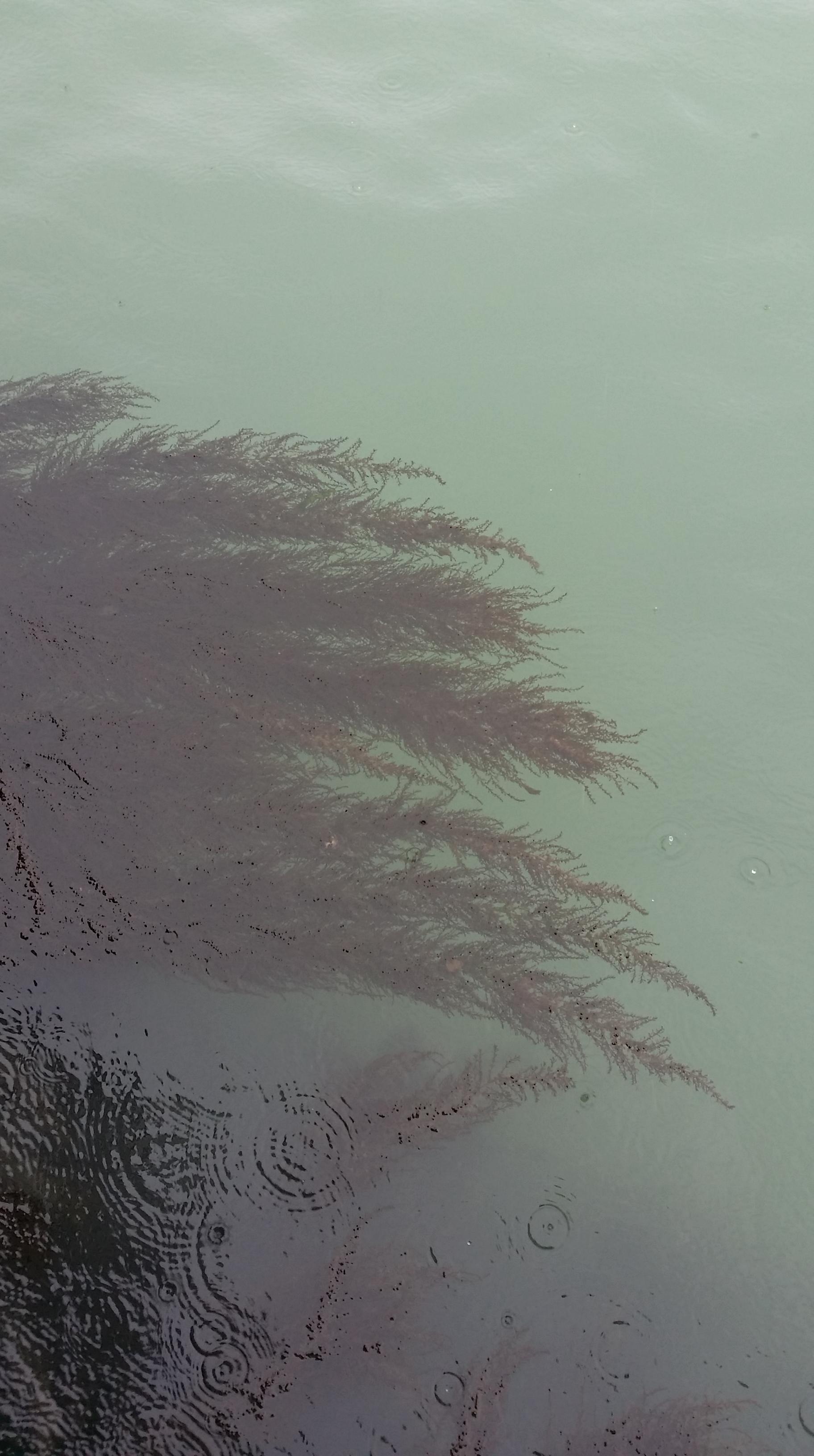 Piante acquatiche a Venezia