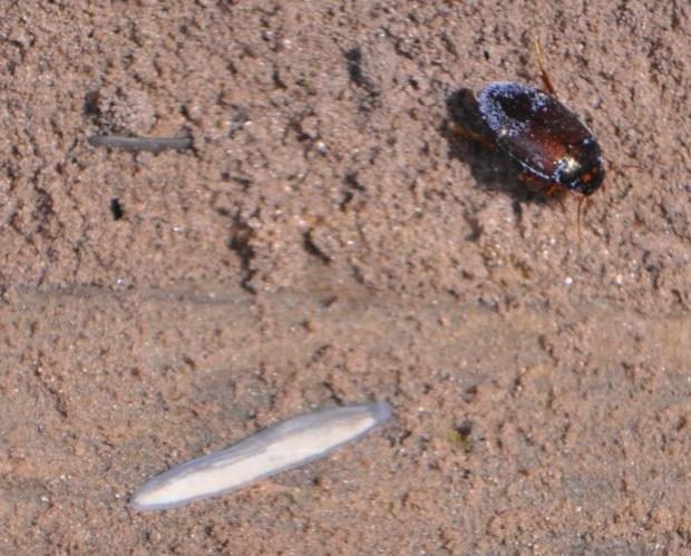 insetti-1